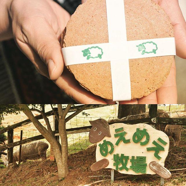 『めえめえ牧場』 - 山添村 -神野山にあるめえめえ牧場。鹿せんべいならぬ、ひつじせんべいがあります#奈良 #山添村 #めえめえ牧場 #羊 #ひつじせんべい