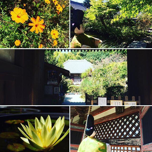佐保寺の三観音 不退寺詳しくは『奈良のおすすめブログ』にて。プロフィールのリンクからご覧下さい #奈良 #奈良が好き #不退寺 #在原業平 #ちはやふる #聖観音 #リボン